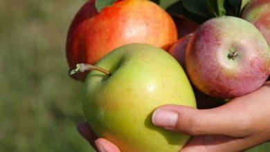 Photo of هل تبقيك حبة تفاح في اليوم بعيداً عن الطبيب فعلاً؟