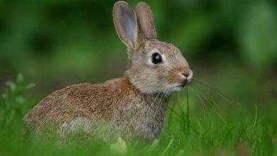 Photo of الأرانب في قفص الاتهام ..