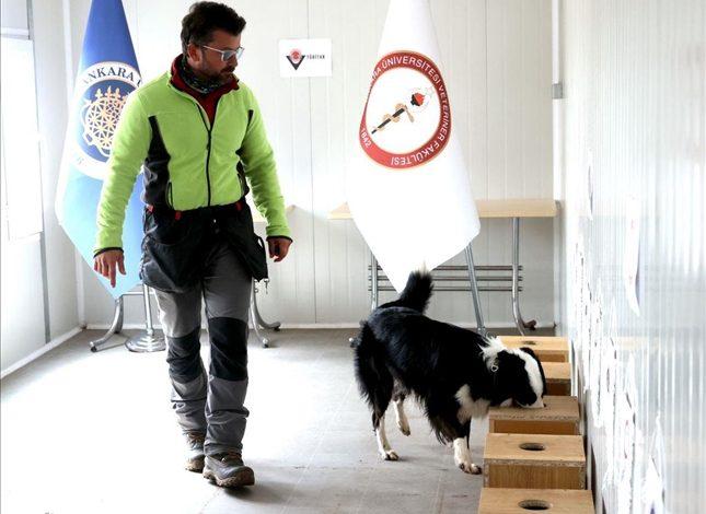 Photo of جامعة تركية تجند الكلاب للكشف عن كورونا